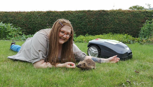 Do robotic lawn mowers hurt hedgehogs? Dr Hedgehog has the answer