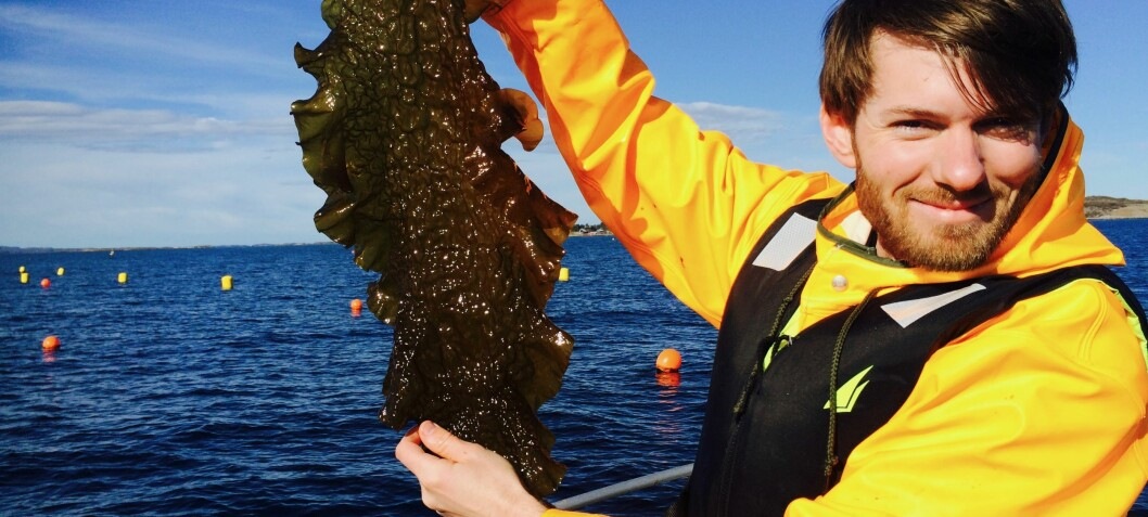 Serving up edible kelp to Michelin restaurants and supermarkets