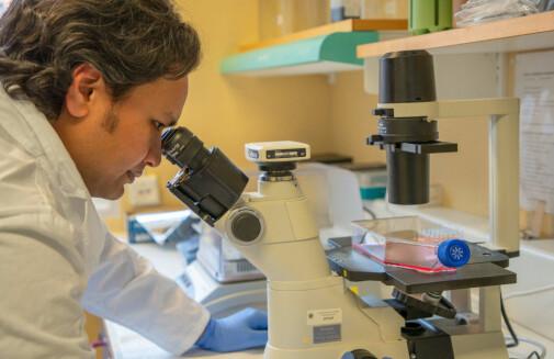 New medicine can stop autoimmune disease in mice