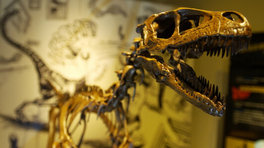 Ancient skeletons are a bit like puzzles